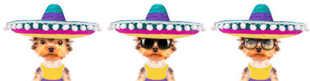 dog wearing a mexican hat photo