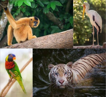 animal in the wild: Group of different wild animal of Asia