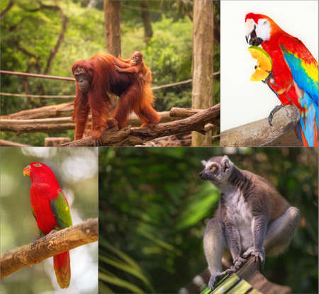 utang: Group of different wild animal of Asia