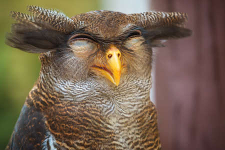 oddball: Owl portrait, close up of funny face
