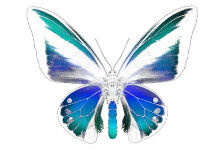 colorful frame: Black and white image of butterfly with colorful wings. Invert image on white background Stock Photo