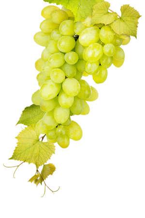 white grape: White grape isolated on a white background Stock Photo