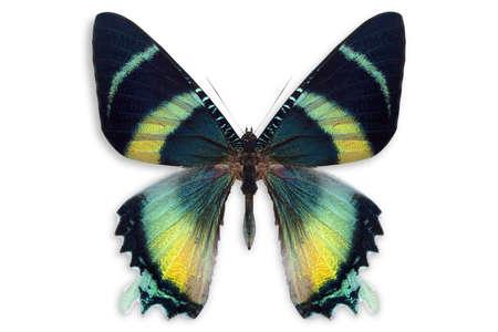 beau fond avec beaucoup de différents butterflys