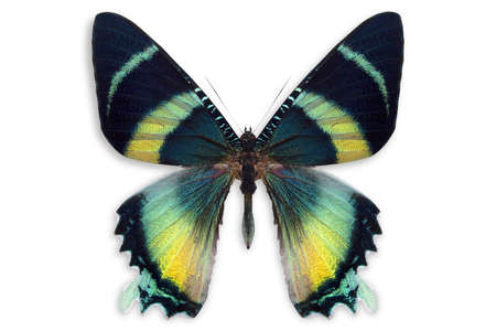 mariposas amarillas: hermoso fondo con gran cantidad de mariposas Foto de archivo