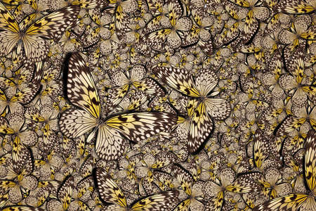 butterflys: beautiful background with lot of different butterflys