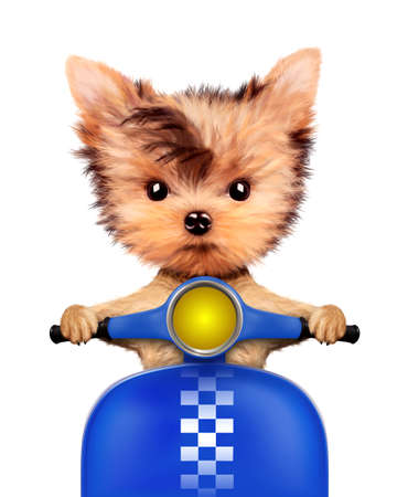 Adorable puppy sitting on a motorbike