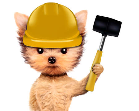 claw hammer: Funny dog with hammer Isolated on white