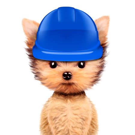 Funny dog in hard hat Isolated on white