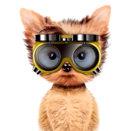 Funny dog in safety glasses Isolated on white Фото со стока