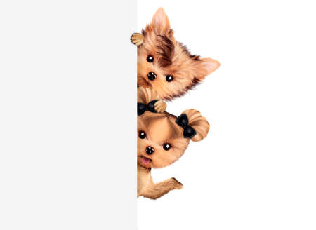 Funny couple of puppies holding empty banner Stock Photo