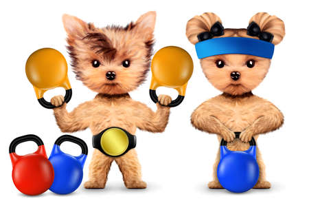 Funny dogs training with kettlebells in sport gym Stock Photo