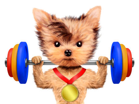 Funny dog training with barbell and have medal