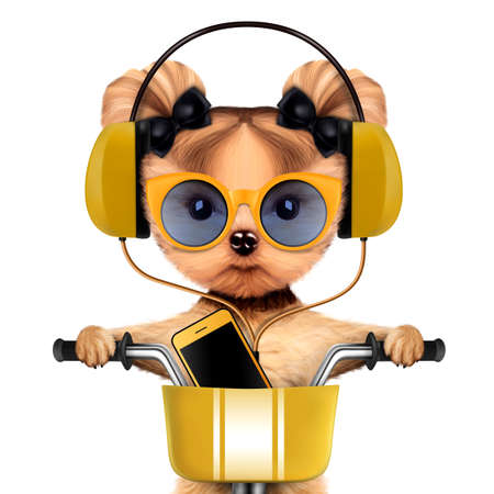 Adorable puppy with headphones sitting on bike Stock Photo