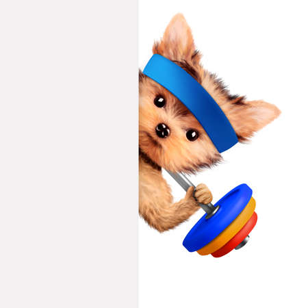 Funny dog training with barbell behind banner Stock Photo