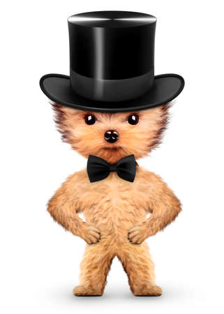 Funny gentleman doggy with black bow and cylinder hat