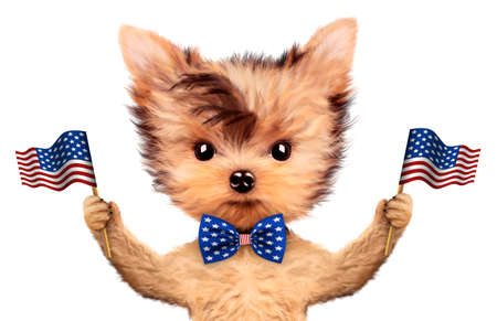 Funny dog holding USA flag. Concept of 4th of July
