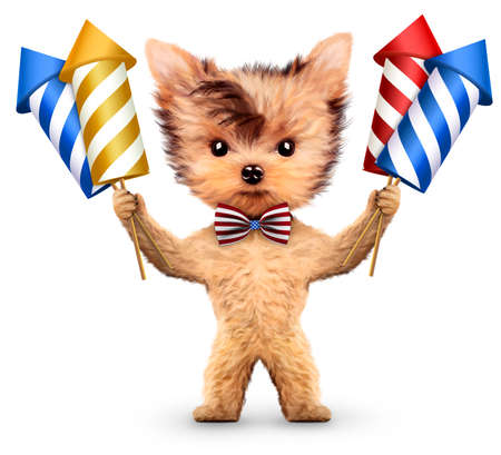 dinamita: Funny perro celebración de cohetes de fuegos artificiales
