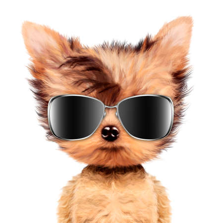 grooming: Funny adorable doggy girl with aviator sunglasses Stock Photo