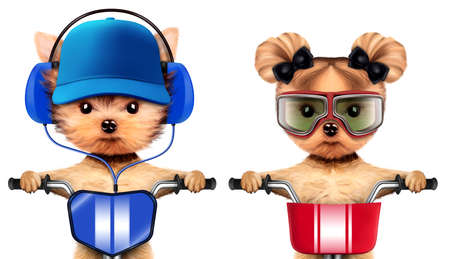 Adorable puppies with headphones sitting on bike Stock Photo