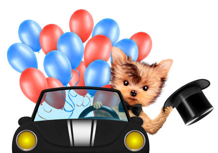 dog grooming: Funny dog holding USA flags, sitting on car and surrounded by balloons. Concept of 4th of July and Independence Day, Realistic 3D illustration.