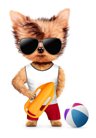 Funny animal with rescue can and beach ball