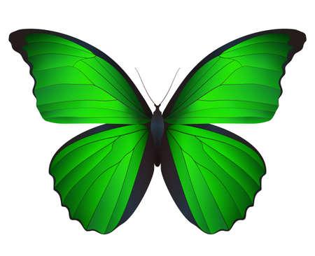 Mooie vlinder geïsoleerd op een witte achtergrond. Vector 3D illustratie