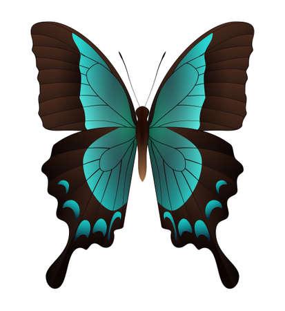 Mariposa hermosa aislado en un fondo blanco