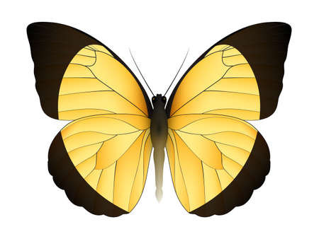 Beautiful butterfly isolated on a white background. Eurema candida butterfly. 3D illustration Illustration