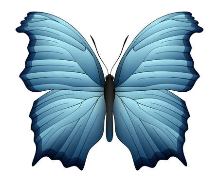 pupa: Beautiful butterfly isolated on a white background Illustration