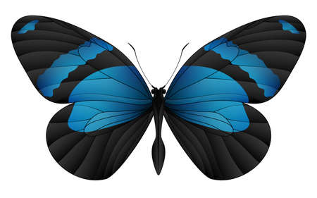 Beautiful flying insect illustration.