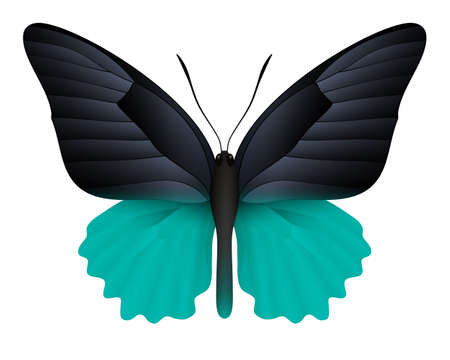 antennae: Beautiful butterfly isolated on a white background Illustration