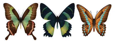 Set of colorful realistic moths icon. Illustration