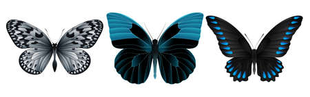 pupa: Set of colorful realistic butterflies. Vector 3D illustration