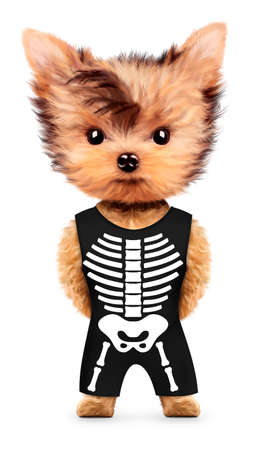 traje mexicano: Esqueleto gracioso. Concepto de Halloween y el día muerto