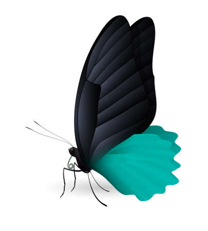 Beautiful butterfly isolated on a white background. Rumanzovia scarlet Mormon butterfly. 3D illustration Illustration