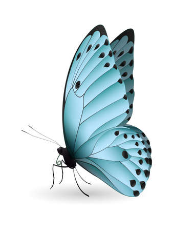 Beautiful butterfly isolated on a white background Stock Photo