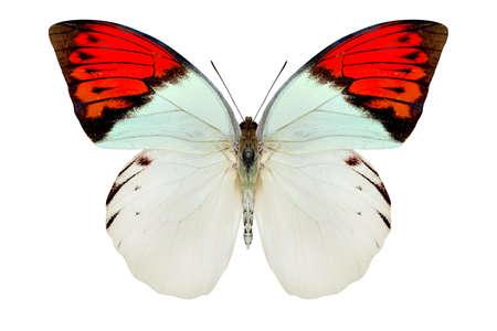 Beau papillon isolé sur un blanc Banque d'images - 86948880