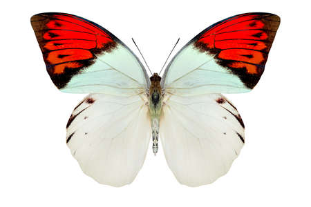 prachtige vlinder geïsoleerd op een witte