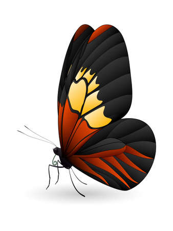 Beautiful butterfly isolated on a white background Illustration