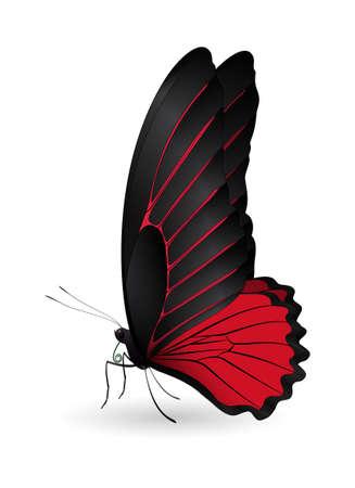 Beautiful butterfly illustration.