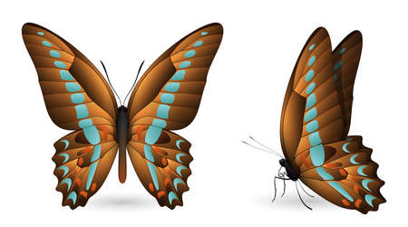 pupa: Set of colorful realistic butterflies. Illustration