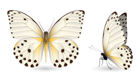 Set of colorful butterflies. Front and side view, vector illustration. Illustration