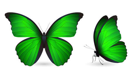 pupa: Set of colorful butterflies. Front and side view, vector illustration. Illustration