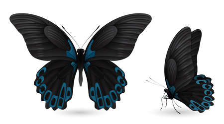 Set of colorful realistic butterflies. Illustration