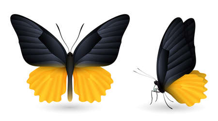 Set of colorful realistic butterflies. Front and side view, vector illustration. Illustration