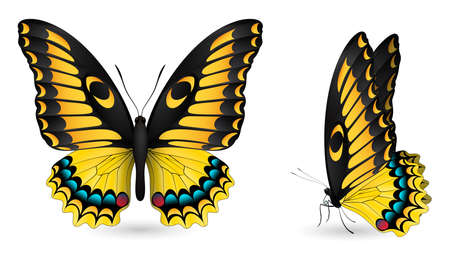 Set of colorful realistic butterflies. Front and side view. Vector 3D illustration. Illustration