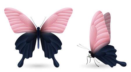 Set of colorful realistic butterflies. Front and side view. Vector 3D illustration. Ilustração