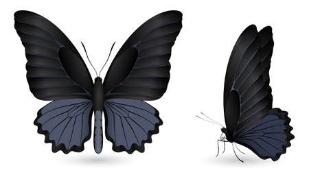 Set of colorful realistic butterflies. Front and side view. Vector 3D illustration