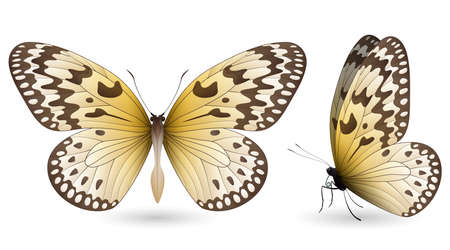 pupa: Set of colorful realistic butterflies. Front and side view. Vector 3D illustration
