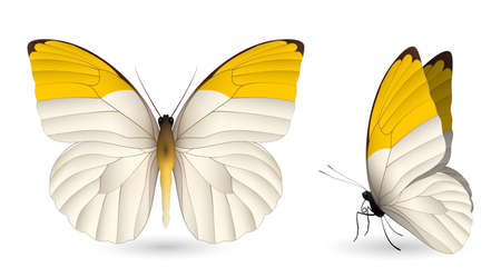 pupa: Set of colorful butterflies Illustration